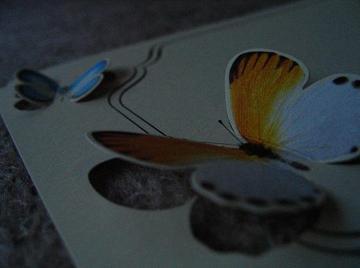 Hotel_butterfly