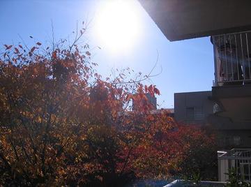 Cielo_del_autunno